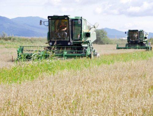 Почти 70% урожая ячменя собрали аграрии ЕАО