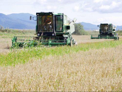 Из цикла «сказки Левинтандерсона»? Инвестор из КНР планирует открыть завод по сборке сельхозтехники в ЕАО