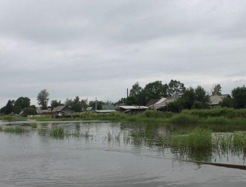Двухлетняя малышка утонула в одном из болот Биробиджана