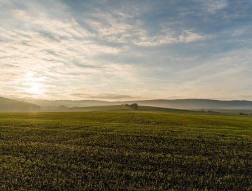 С 1 октября в ЕАО откроют 65% территории для «дальневосточного гектара»