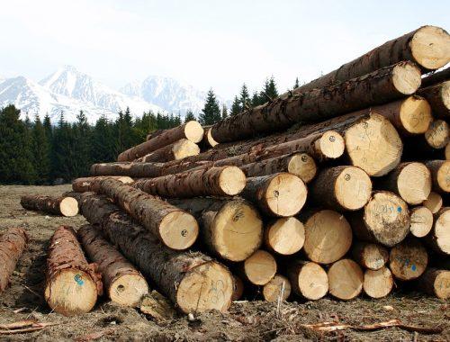 За грязный склад наказали лесопромышленников в ЕАО