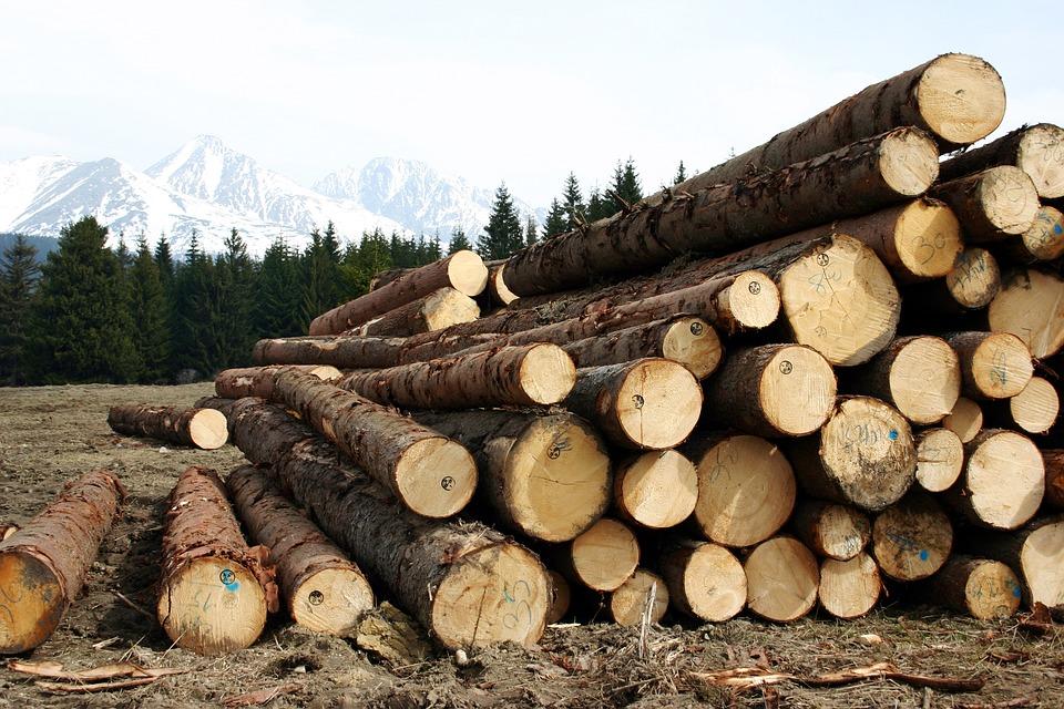 Из Бурятии за три месяца вывезли лес на 47 млн долларов