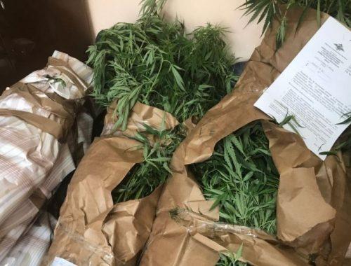 255 кустов конопли обнаружили на частном подворье жителя п. Известковый