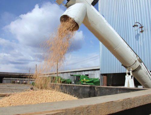 160 тысяч тонн сои планируют собрать фермеры ЕАО в этом году