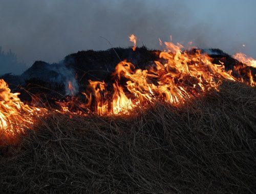 В Биробиджане восьмиклассник сдерживал пал сухой травы до приезда пожарных