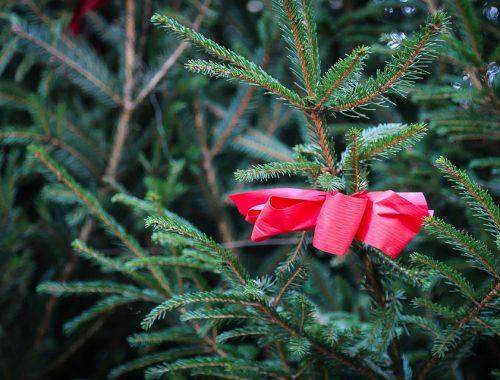 Городская елка в Якутске оказалась дороже, чем в Нью-Йорке