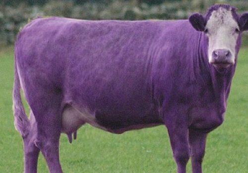 План «Фиолетовая корова»? В управлении здравоохранения ЕАО вынашивают реформу финансовой службы