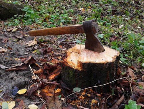 Ученые: запасов древесины в Сибири при существующей системе заготовки хватит на 15 лет