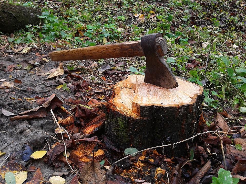 Возбуждено уголовное дело по факту незаконной вырубки деревьев в с. Лазарево