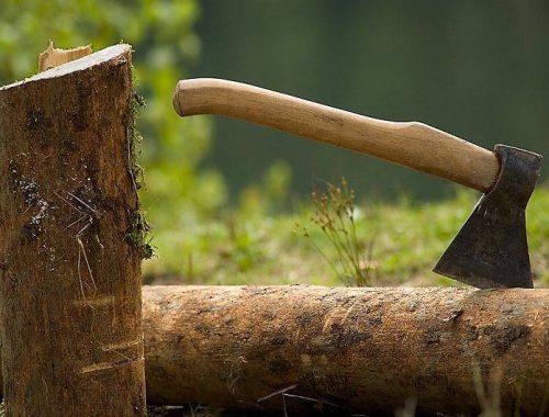 Возбуждено уголовное дело о незаконной вырубке леса в селе Пузино