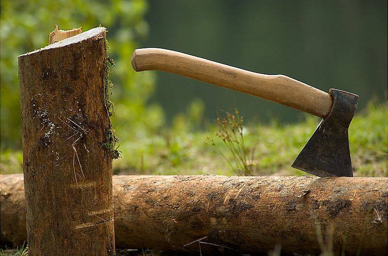 Возбуждено уголовное дело по факту незаконной вырубки деревьев в Лондоковском лесничестве