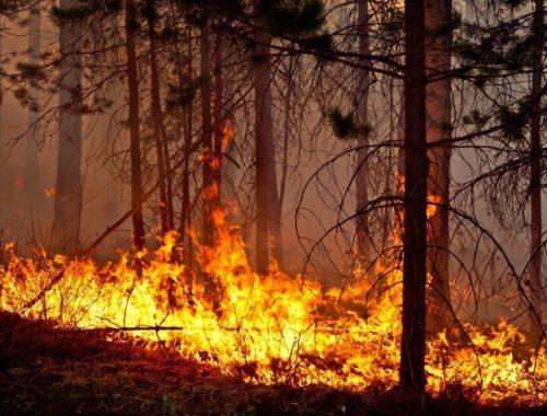 Лесные пожары продолжаются в ЕАО