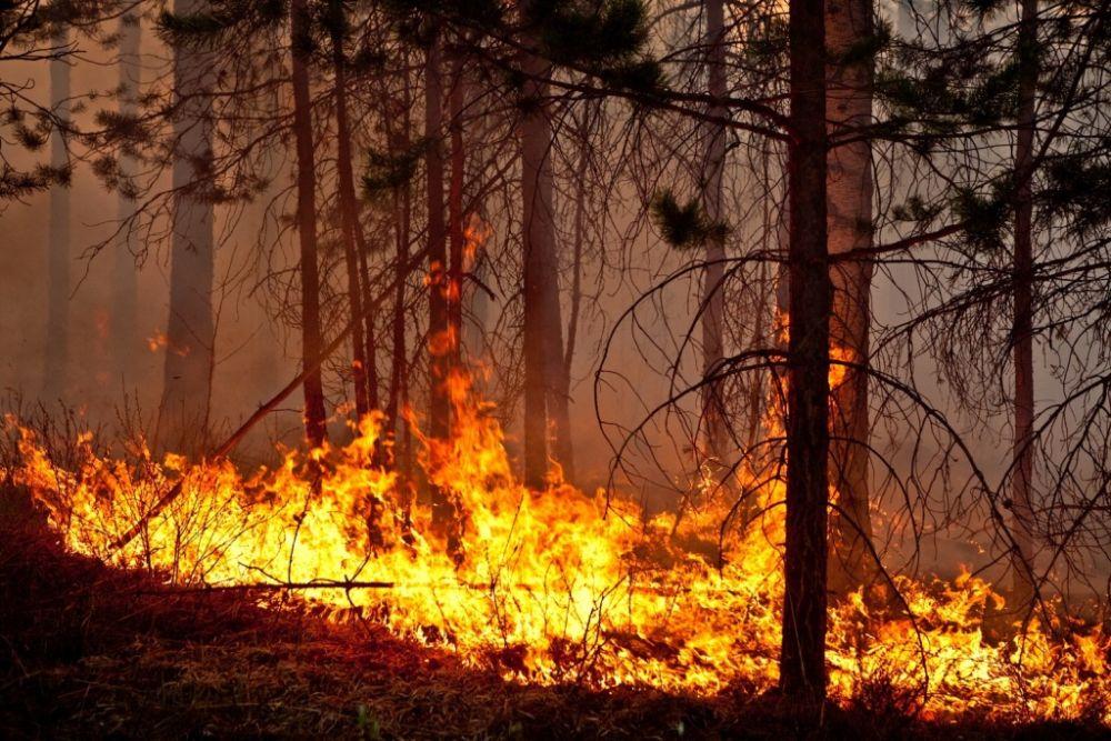 На треть увеличилась площадь природных пожаров на территории ЕАО в 2018 году