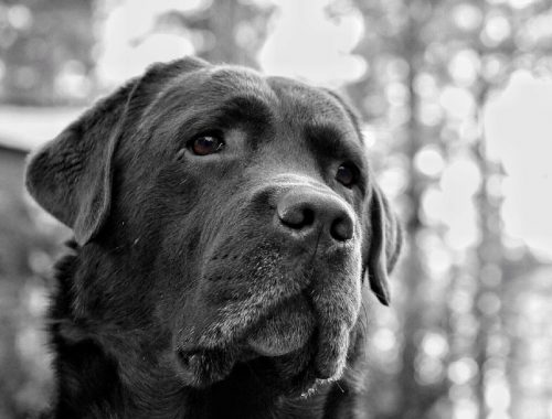 Останки около 30 собак нашли на берегу озера Мылки в Комсомольске-на-Амуре