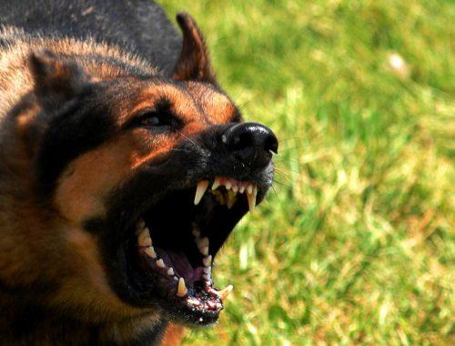 384 жителя ЕАО пострадали от укусов животных за полгода