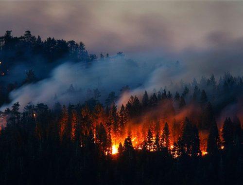 Гринпис рассказал об истинных масштабах лесных пожаров в ЕАО