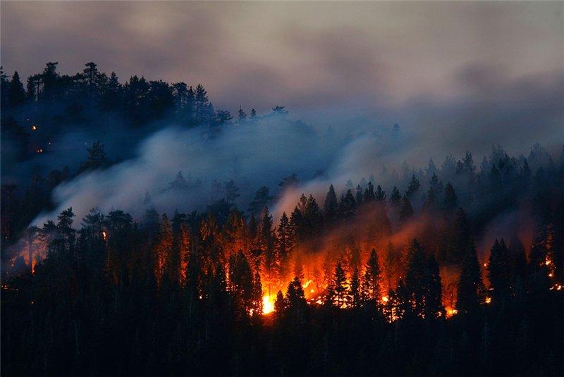 В ЕАО начались лесные пожары — за день сгорело 43 гектара