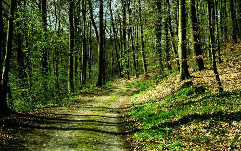 Чиновники «потеряли» миллиард гектаров российского леса