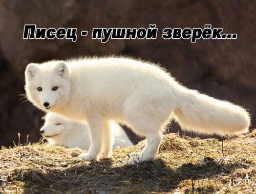 Полный «пипец»: Роскомнадзор полгода судился с интернет-газетой «Набат» из-за спорного слова и проиграл