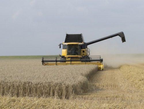 В 2018 году объем урожая зерна в России упадет до 100 млн тонн
