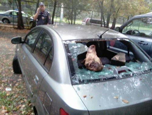В Москве депутату-оппозиционеру разбили машину и оставили в ней голову свиньи
