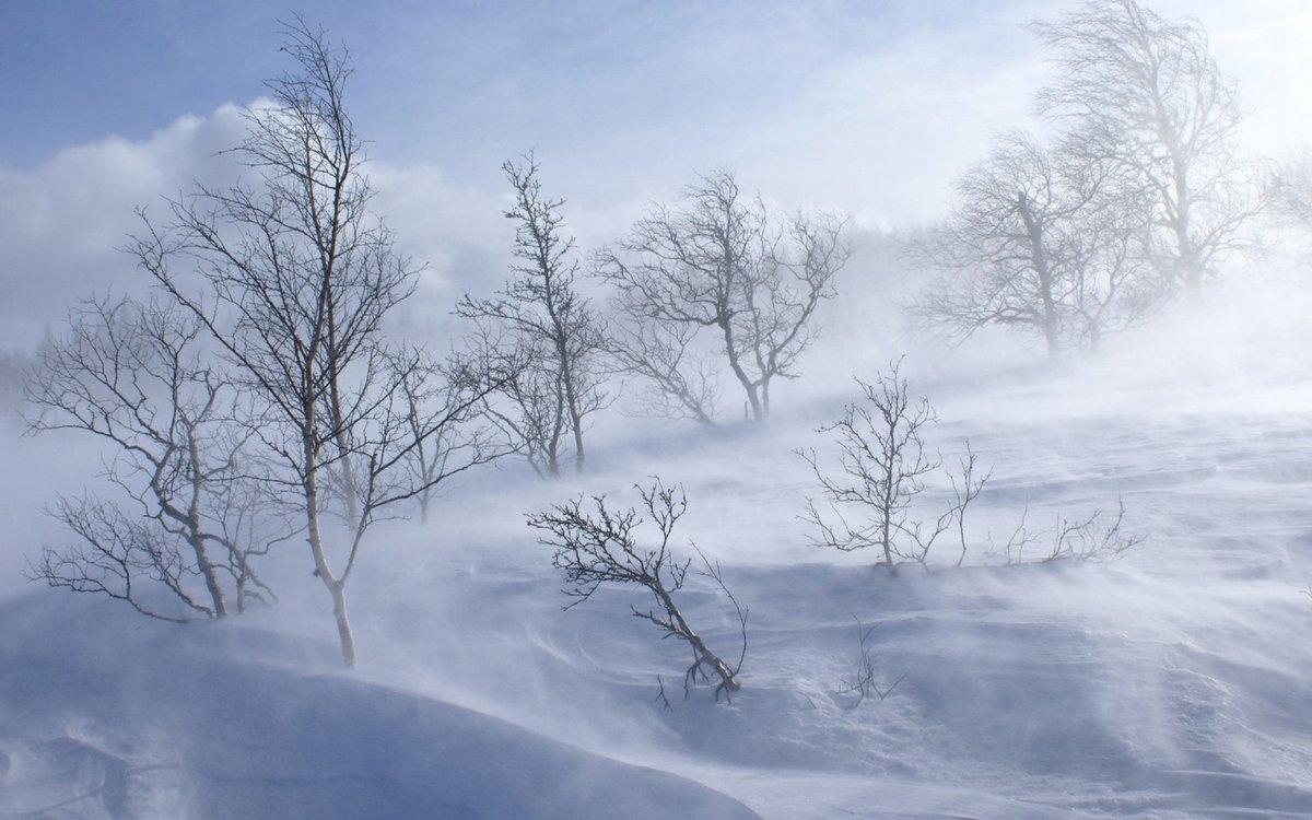 Завтра на территории ЕАО ожидается усиление ветра