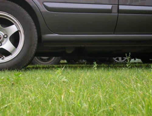 В ЕАО принят закон о штрафах за парковку на газонах