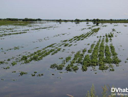 В ЕАО пострадавшие от паводка хозяйства получат 420 млн рублей