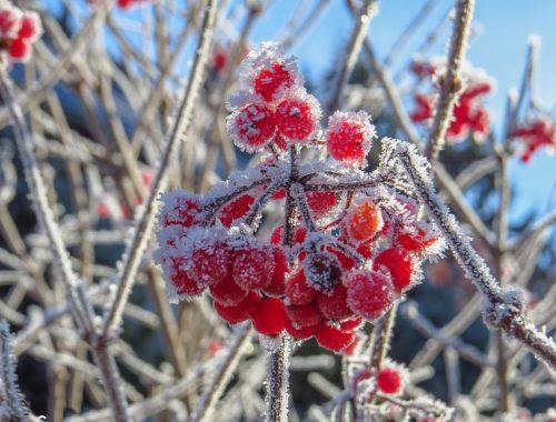Заморозки ожидаются ночью на территории ЕАО