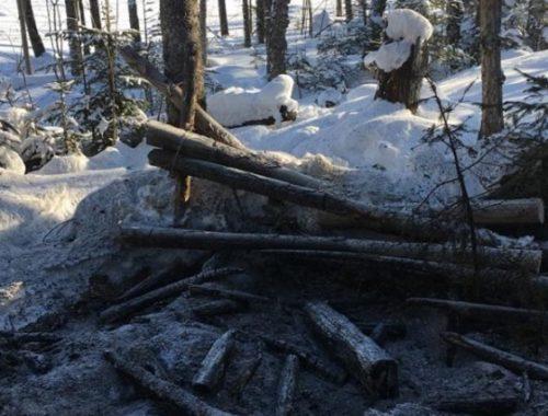 Госучреждение ЕАО ответит за «свинарник», устроенный иностранными лесорубами под Хинганском