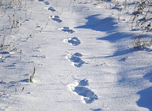 Прошедший вчера ночью снег помог задержать предполагаемого грабителя в Биробиджане