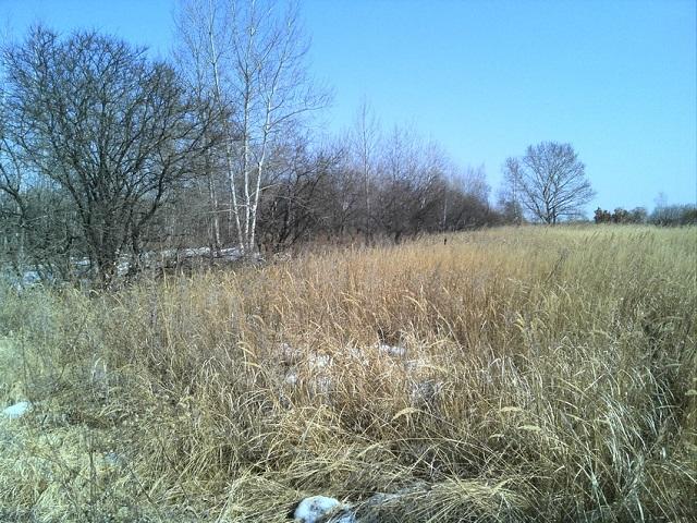 За сорную траву оштрафован собственник земельных участков в ЕАО