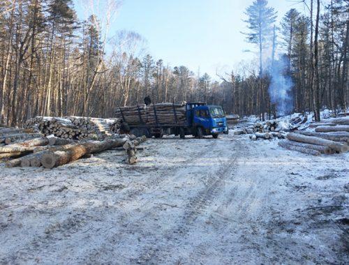 На 210 тысяч оштрафовали китайских лесорубов в Облученском районе ЕАО