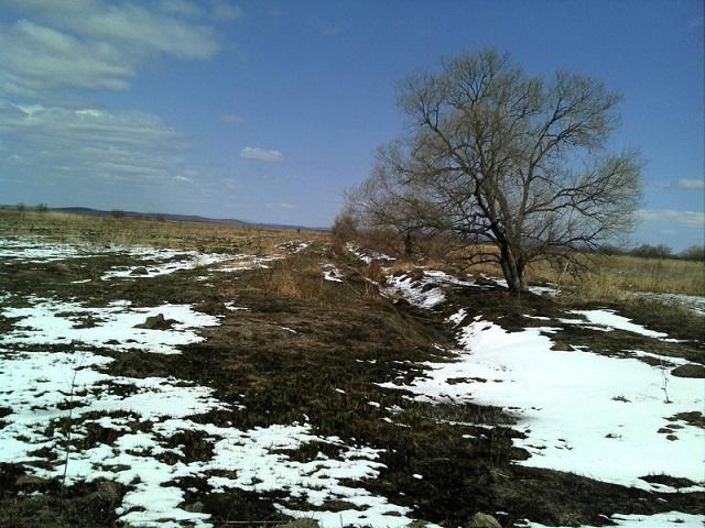 Более 2 000 га сельхозземель заросли сорной травой в ЕАО