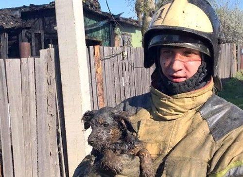 Трехмесячного щенка спас от огня биробиджанский пожарный