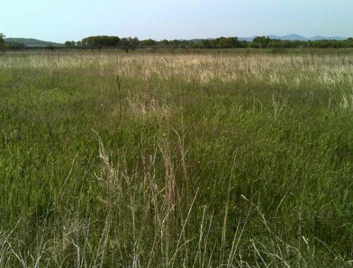 478 га земли под Бирофельдом заросли кочками, деревьями и сорняками