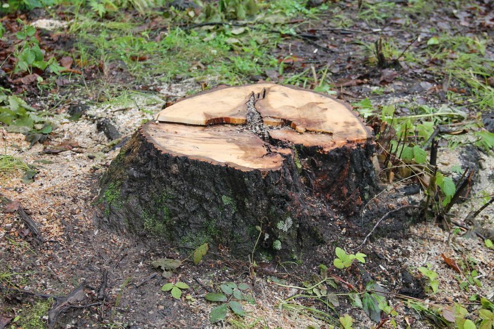 Губернатор Приморья просит не ограничивать вывоз леса в Китай до 2023 года