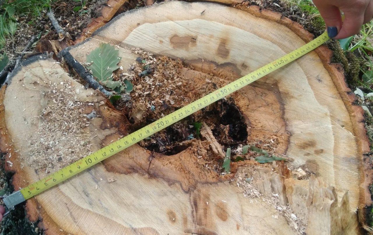 Природоохранная прокуратура начала проверку по факту вырубки деревьев в с. Раздольное после публикации «Набата»