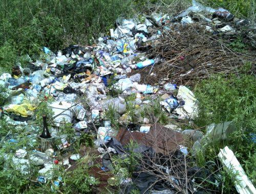Россельхознадзор обнаружил несанкционированные свалки в Октябрьском районе