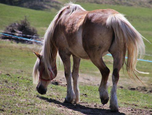 Лошадь ударила копытом и травмировала 12-летнюю девочку в Бабстово — прокуратура проводит проверку