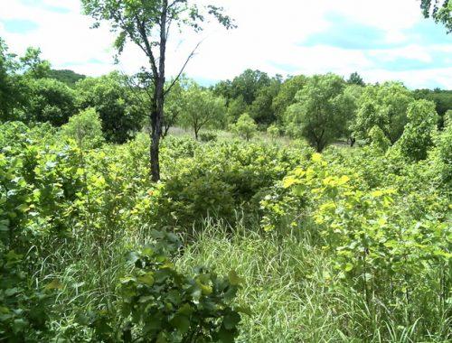 Более 400 га земли заросло бурьяном в ЕАО