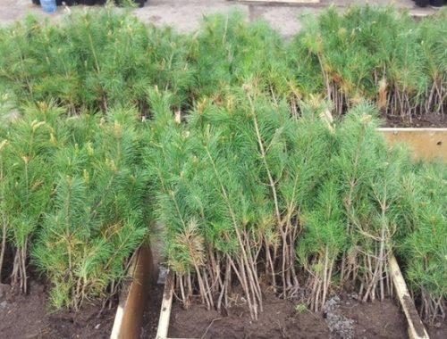Тепличный комплекс в биробиджанском лесхозе заработает в полную силу