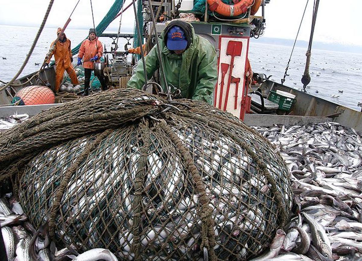 В ЕАО выявили фантомную площадку для незаконного оборота рыбы