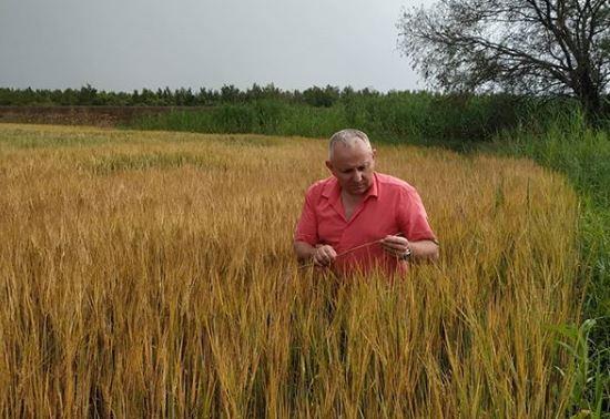 Более чем в два раза выросла площадь неиспользуемых сельхозземель в ЕАО