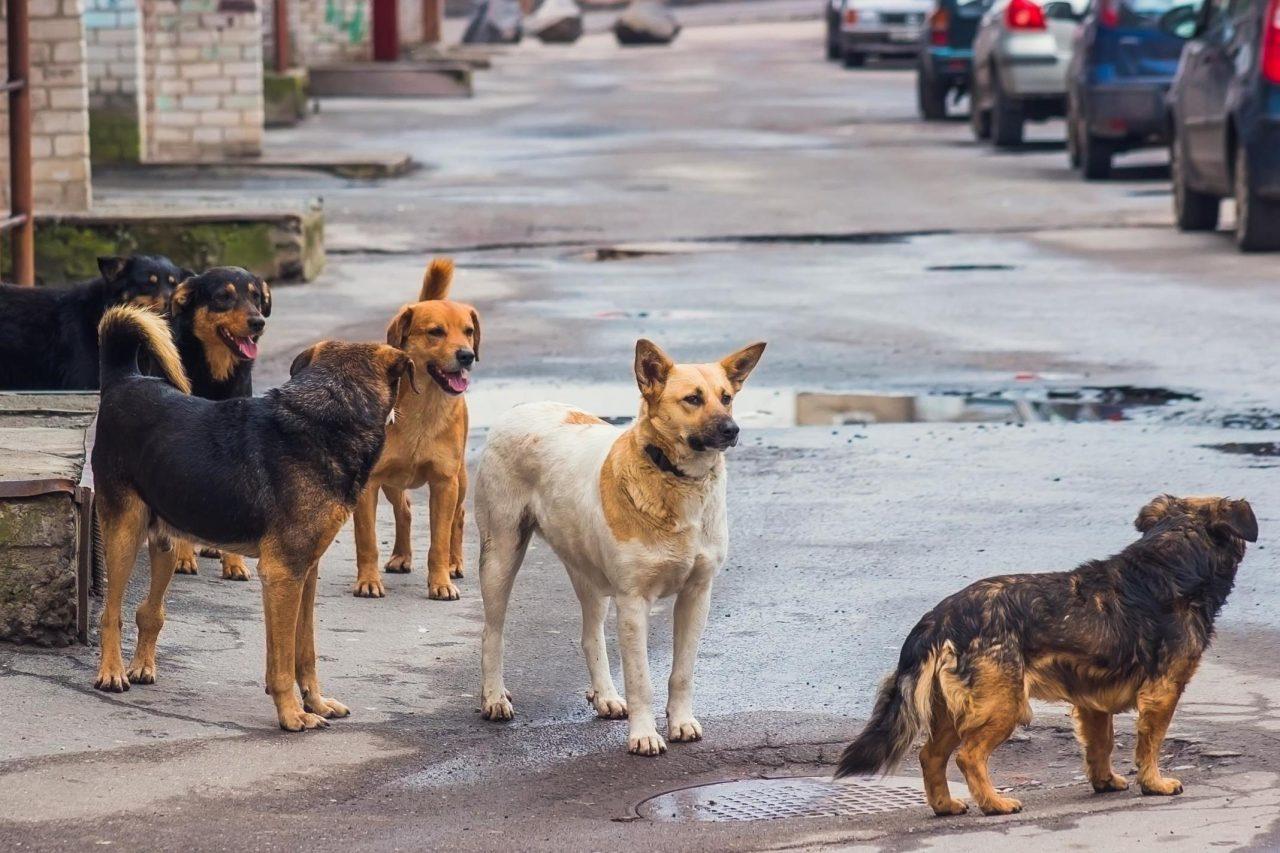 В Биробиджане приступили к отлову бездомных животных