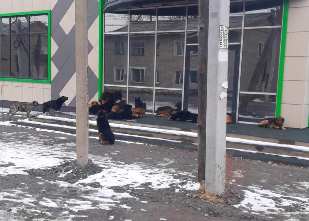 Что делать с бездомными собаками?