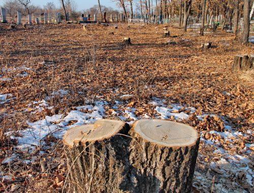 Стала известна сумма ущерба, причинённого Птичнинскому поселению незаконными рубками леса