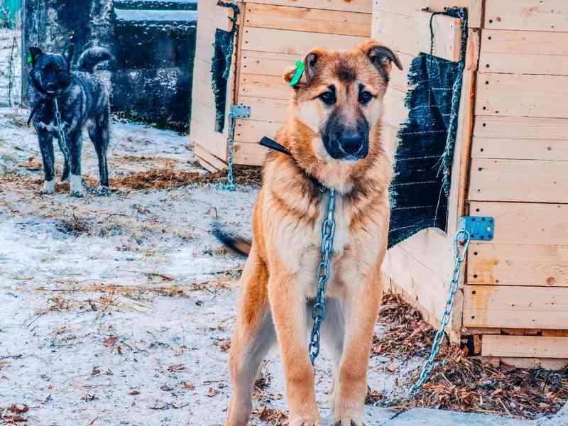 Законопроект об обязательном чипировании домашних животных обсудит Госдума
