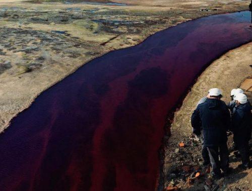 От «Норникеля» требуют ещё 500 миллионов за гибель тысяч животных в результате разлива топлива