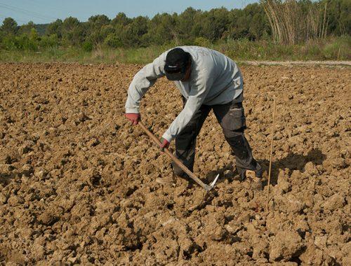 В ЕАО появился сайт для фермеров